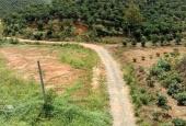 Khu nghỉ dưỡng 3,6 ha, view đồi, đường lớn