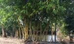 Chính chủ cần bán đất vị trí đẹp tại Đồng Nai