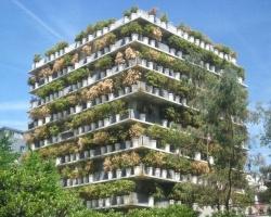 380 chậu trúc bao phủ chung cư 10 tầng