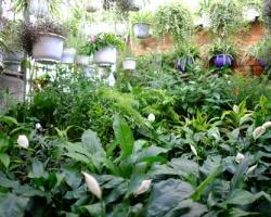 Mái nhà biến thành vườn treo xanh mướt ở Hà Nội