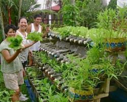 Vườn rau xanh mọc từ hàng trăm chai nhựa